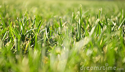 Green grass close view