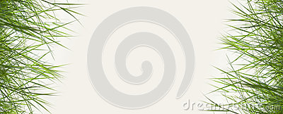 Green grass with copy space,material for designer