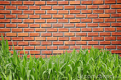 Green grass curve and brickwall