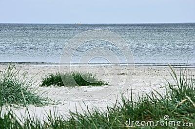 Green grass on a deserted beach