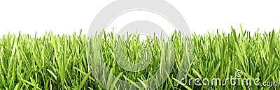 Green grass detailed close up