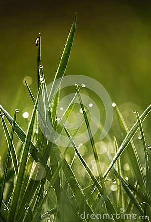 Green grass with drops in the morning