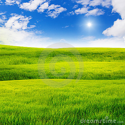 Free Green Grass Field Stock Photography - 19045212