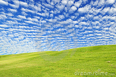 Green Grass Field Stock Photo - Image: 19265030