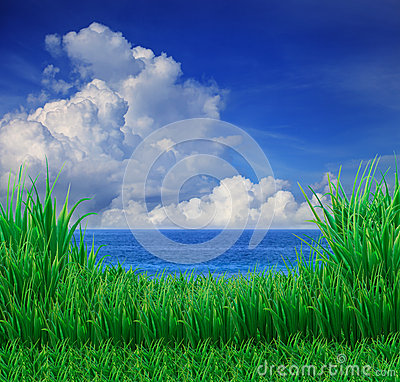 Green grass field and blue sky white cloud