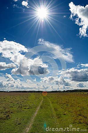 Green Grass Field in Countryside Under Midday Sun