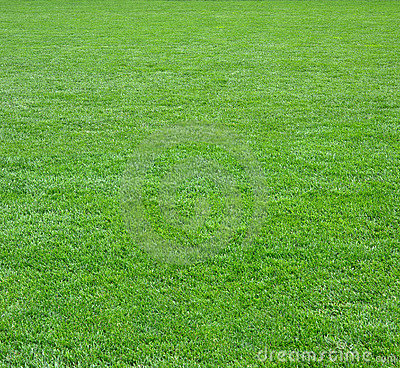 Free Green Grass Field Square Royalty Free Stock Images - 6145149