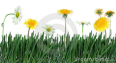 Green grass and flower