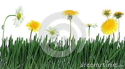 Green grass and flower