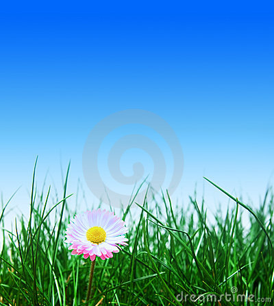 Green grass, flower and blue sky