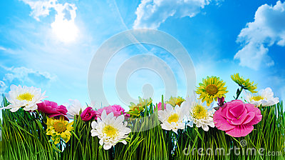 Green grass flower frame