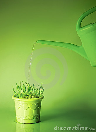 Green grass in flowerpot and watering can