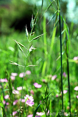 Green grass and flowers