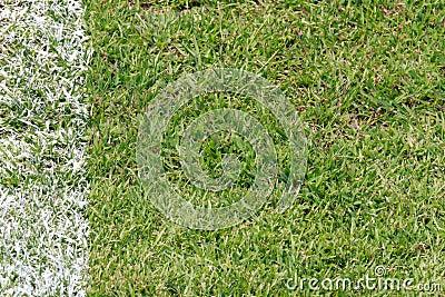 Green grass at football field