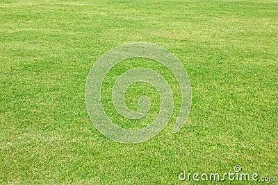 Green Grass Of Football Field.