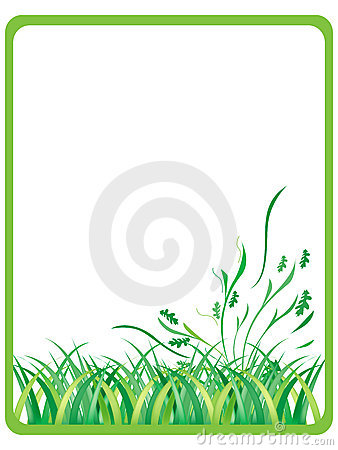 Green grass in frame