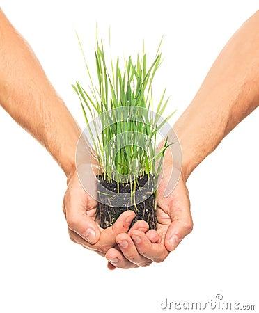 Green grass in human hands