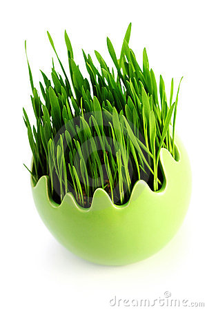 Free Green Grass In Egg Stock Images - 13915684