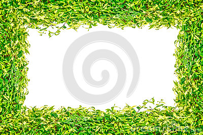 Green grass isolated frame for background