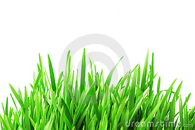 Green grass isolated on the wh