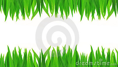 Green Grass Isolated On A White Background Stock Image - Image: 17550131