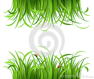 Green grass with ladybirds