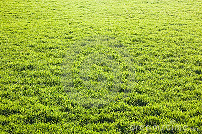 Green Grass Land Stock Image Image 13854281