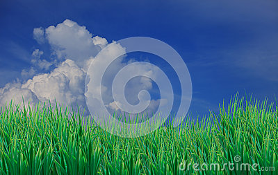 Green grass leaves fore ground and blue sky white
