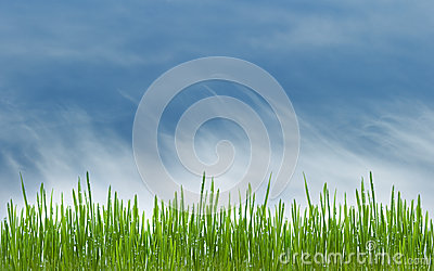 Green grass meadow and blue cloudly sky