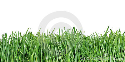 Green grass, the nature backgr