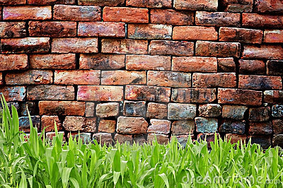 Green grass and old brickwall