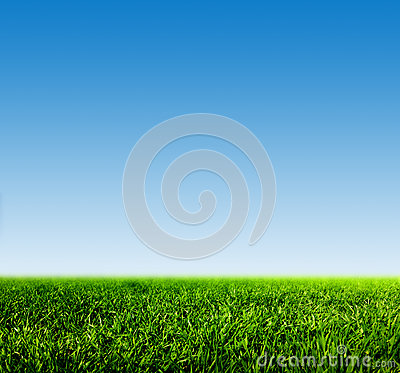 Free Green Grass On Spring Field Against Blue Clear Sky Stock Photography - 49021492