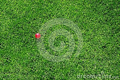 Green grass pink ball
