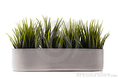 Green grass in pot