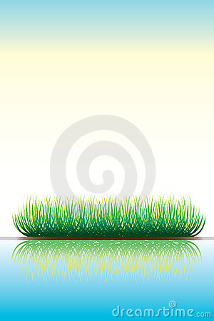 Green grass and reflection