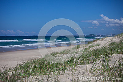 Green grass on sand dunes in Surfers Paradise