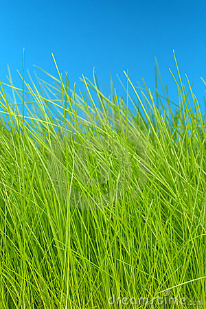 Grass and sky macro