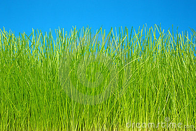 Green grass & sky eco-friendly background