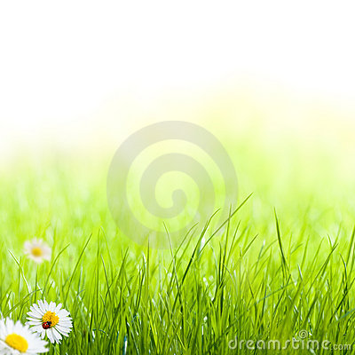 Free Green Grass Spring Garden Background Stock Images - 22762194