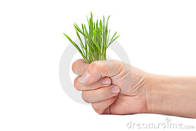 green grass sticks out from the women fist
