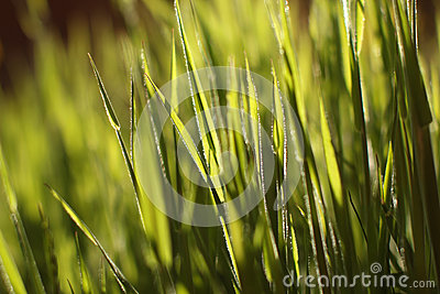 Green grass in the sun
