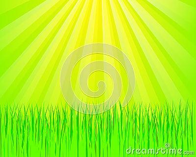 Green grass and sunlights