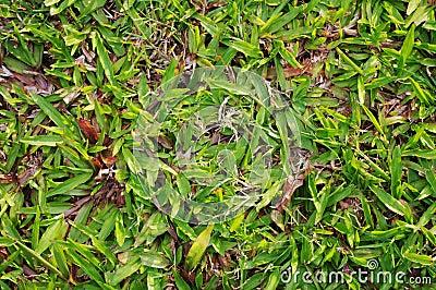 Green grass texture details