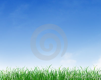 Green Grass Under Blue Clear Sky