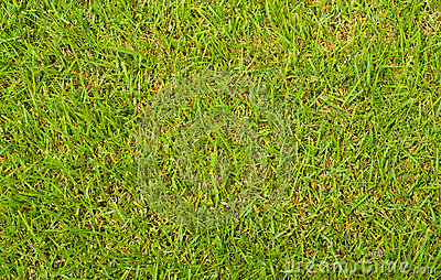 Green Grass View From Above Stock Photography - Image ... Leaves Clipart