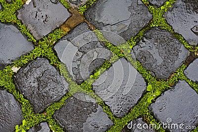 Green grass between wet cobblestones
