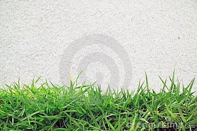 Green grass and white sand