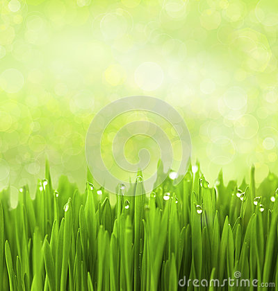 Free Green Grass With Water Drops / Abstract Background Stock Photography - 24892312
