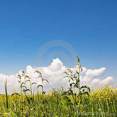 Free Green Grass, Yellow Flowers And Perfect Sky Royalty Free Stock Photography - 14664207