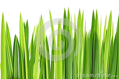 Green grasses layer
